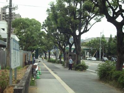 Kusunoki_r